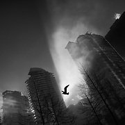 Vancouver - January 24, 2016 - A seagull flies through the fog on a misty morning in Vancouver, British Columbia. <br />