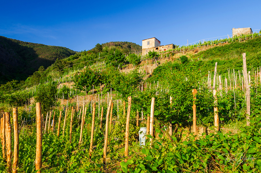 Vineyards and farm house, Corniglia, Cinque Terre, Liguria, Italy