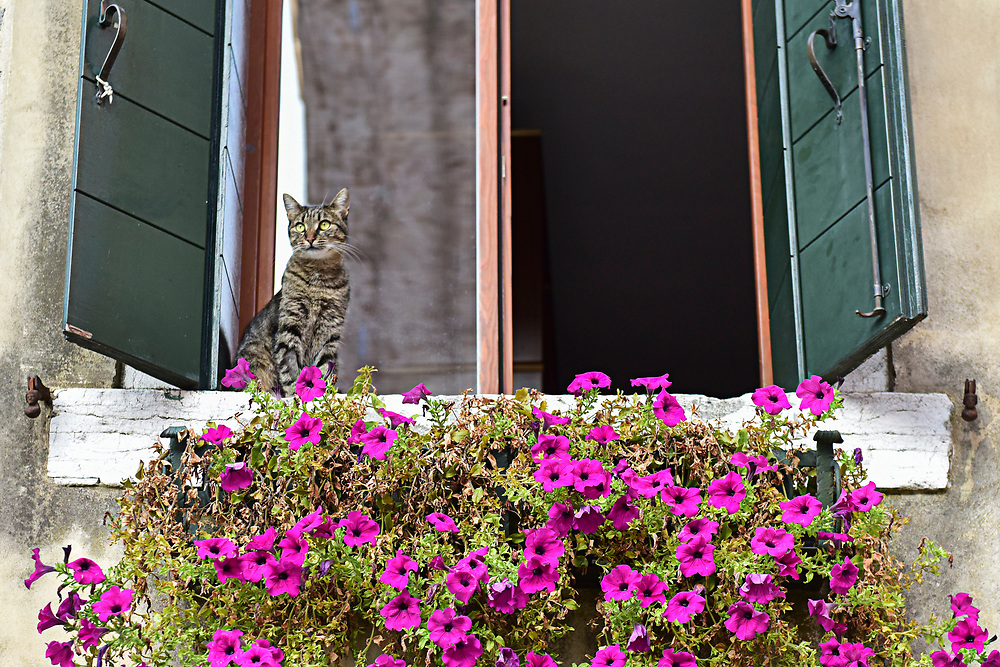 Cats in Venice   - Venice in Colours!<br /> <br /> HOW TO LICENCE THIS PICTURE: please contact us via e-mail at sales@xianpix.com or call our office in London +44 (0)207 1939846 for prices and terms of copyright. First Use Only ,Editorial Use Only, All repros payable, No Archiving.&copy; MARCO SECCHI Cats in Venice
