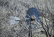 Windmill, Bare Trees, Trees, Winter, New Mexico