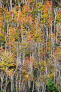 Abstract of colorful autumn trees on a mountainside, Vermont, USA