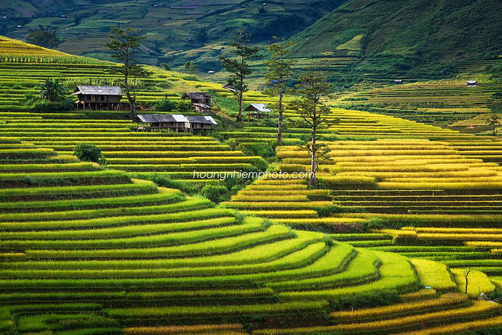 Vietnam Images-landscape-Tu Le-Yen Bai province phong cảnh việt nam