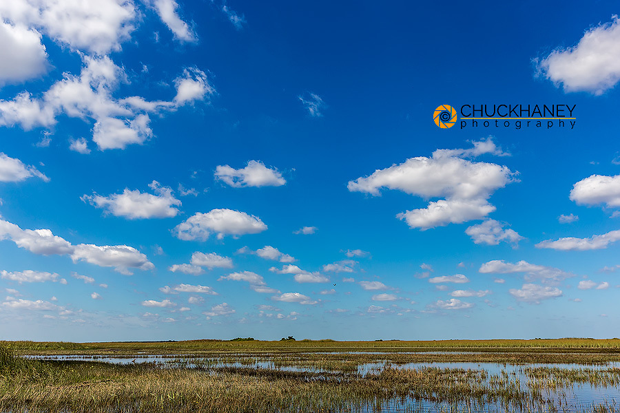 Sawgrass wetlands in Everlgades National Park. Florida, USA