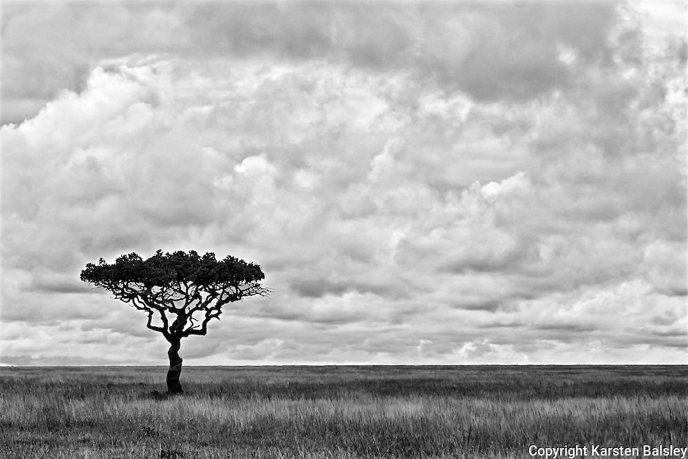 &ldquo; Serengeti&rdquo;                                                    Tanzania<br />