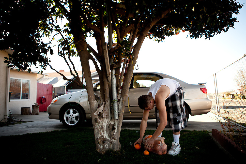 Luis Madrigal gathers oranges in his uncle's front yard in the Parklawn neighborhood of Modesto, Calif., February 23, 2012.