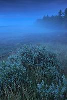 Vangså Klithede - National Park Thy, Denmark