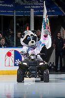 KELOWNA, CANADA - JANUARY 30: Rocky Raccoon, the mascot of the Kelowna Rockets on January 30, 2016 at Prospera Place in Kelowna, British Columbia, Canada.  (Photo by Marissa Baecker/Shoot the Breeze)  *** Local Caption *** Rocky Raccoon; mascot;