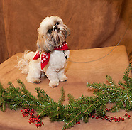 Prescotts Pet Portraits 19Nov11