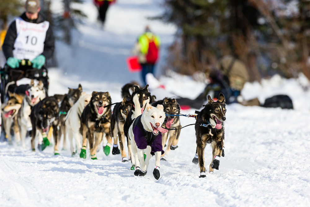 Musher Peter Kaiser competing in the 41st Iditarod Trail Sled Dog Race on Long Lake after leaving the Willow Lake area at the restart in Southcentral Alaska.  Afternoon.