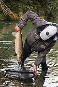 This dominant buck brown trout sipped a tiny nymph on a cold day in New Zealand.