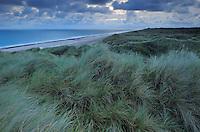 Bøgsted Rende, Tvorup Dune Plantation - National Park Thy