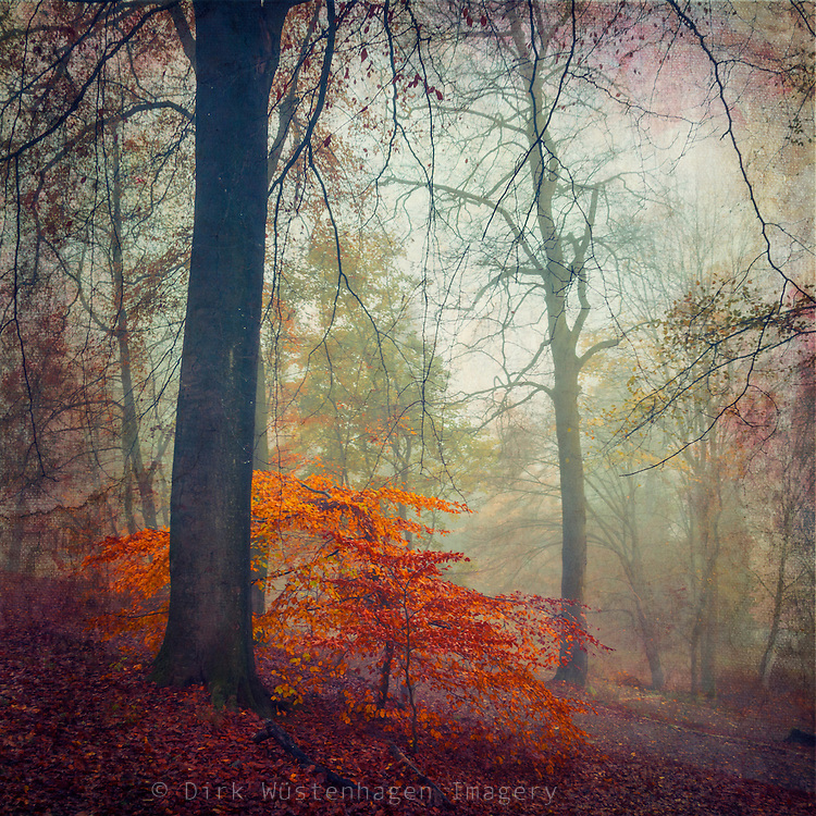 Autumn forest in colours - texturized photograph.