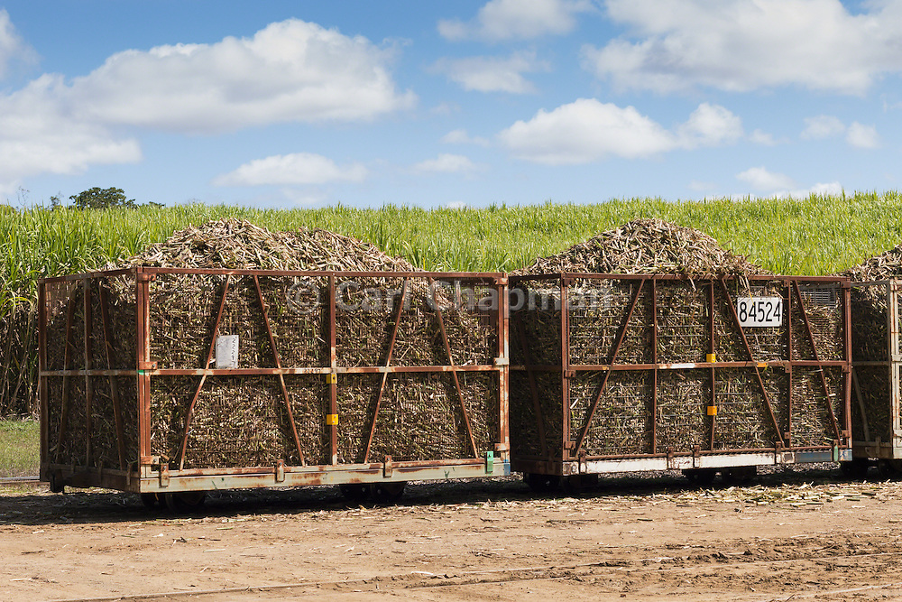 harvested sugar cane train ready for crushing under cumulus cloud in Kuttabul, Queensland, Australia