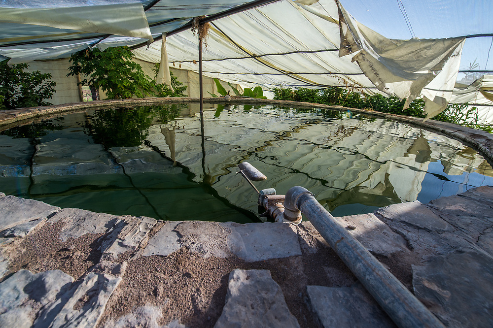 Greenhouse fish tank  on Dabis Guest Farm in Helmeringhausen, southern Namibia, Africa.