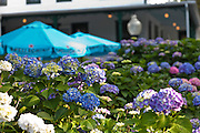Hydrangea blossoms and cafe table umbrellas frame a classic old hotel on Shelter Island