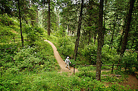 """Harold Smith hikes down the Mineral Ridge Nature Trail during one of his twice weekly outings to the popular hiking area. """"This area is the most accessible and the most beautiful hiking trail around,"""" Smith said about the location he's visited hundreds of times. """"There's just no beating it."""""""