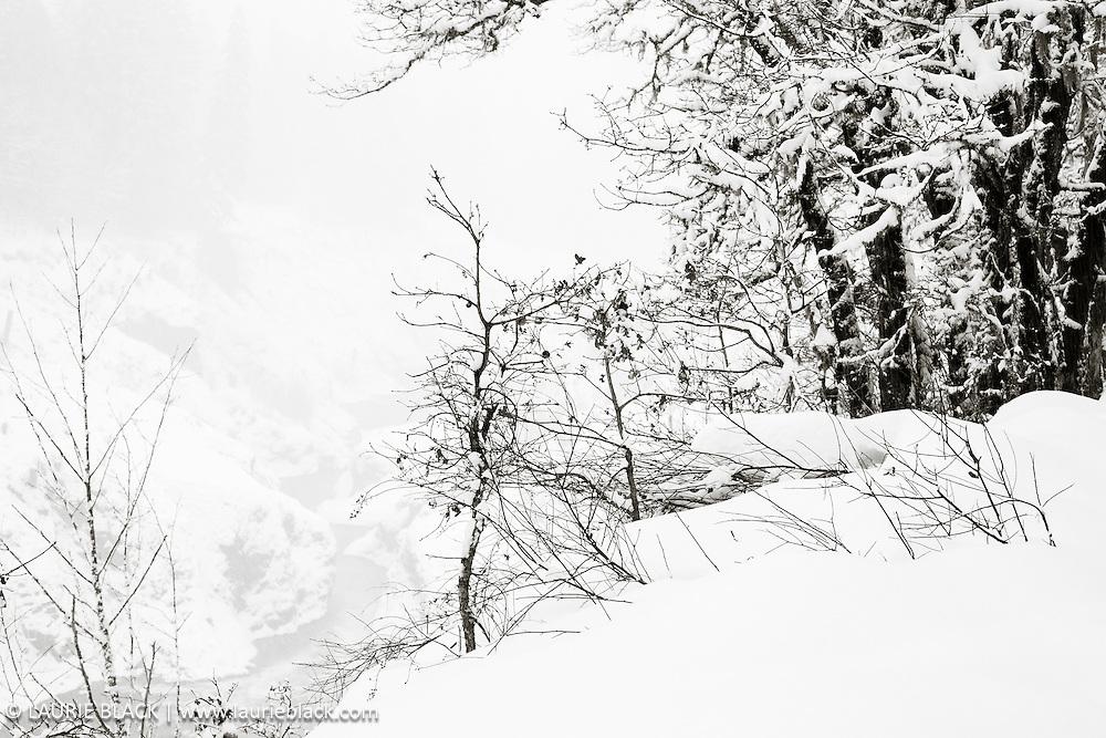 B&W winter landscape fine art photo 2