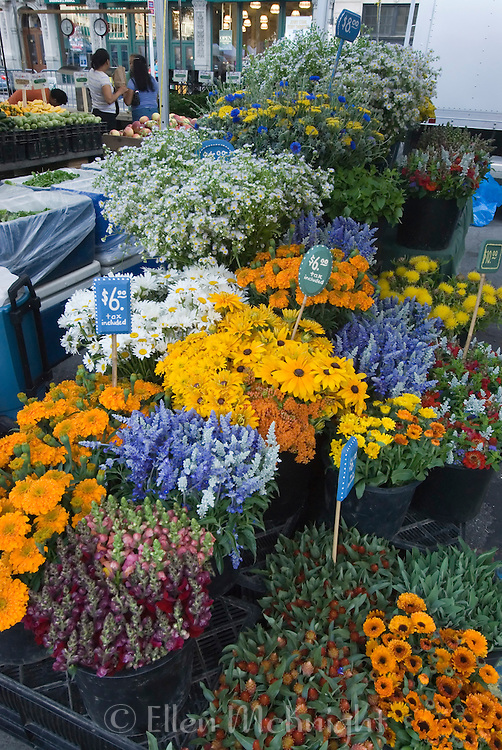 Flowers for sale at Union Square Farmer's Market in Manhattan