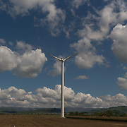 OCTOBER 13 - SANTA ISABEL, PUERTO RICO - <br /> A wind turbine from Pattern Energy's stands tall  on a field near agriculture and farm animals in Santa Isabel after the path of  Hurricane Maria. <br /> (Photo by Angel Valentin/Freelance)