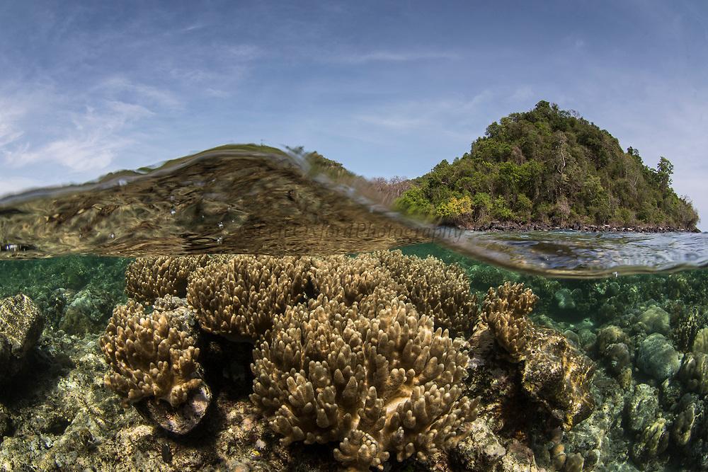 Coral Reef Diversity<br /> Lesser Sunda Islands<br /> Indonesia