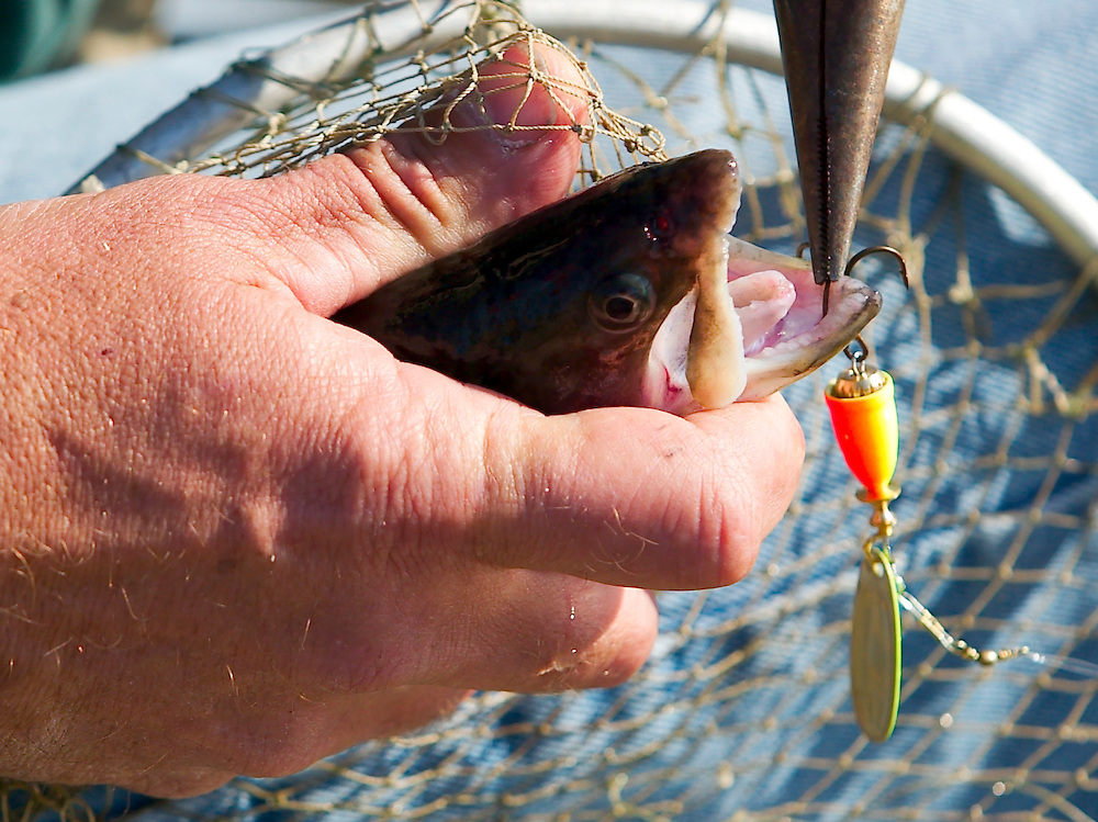 (PPAGE1) Jackson $/10/2004  Jeff page of Jackson uses a pair of pliers to remove a hook in the jaw of the first trout of the day at the Propertown Lake.  Michael J. Treola Staff Photographer.....MJT