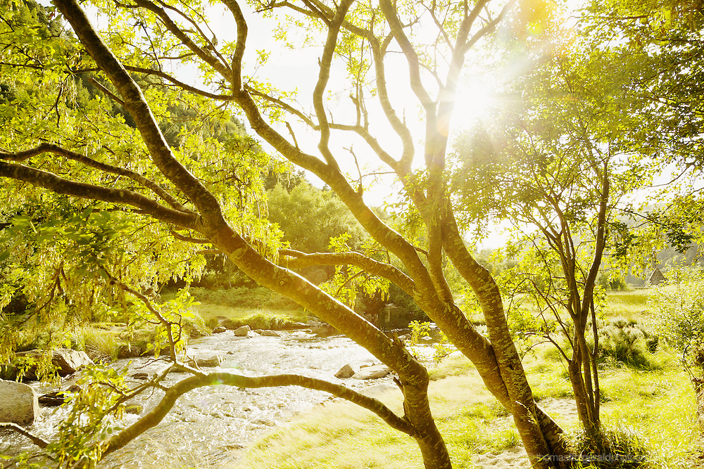 Sun shines through the trees by the river in Glendalough.