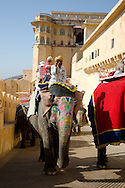 Elephants carrying tourists to the Amber Fort in Jaipur, Rajasthan, India