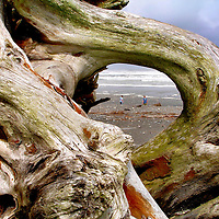 Searching for Jade on Hokitika Beach thru Driftwood Portal in Hokitika, New Zealand<br />