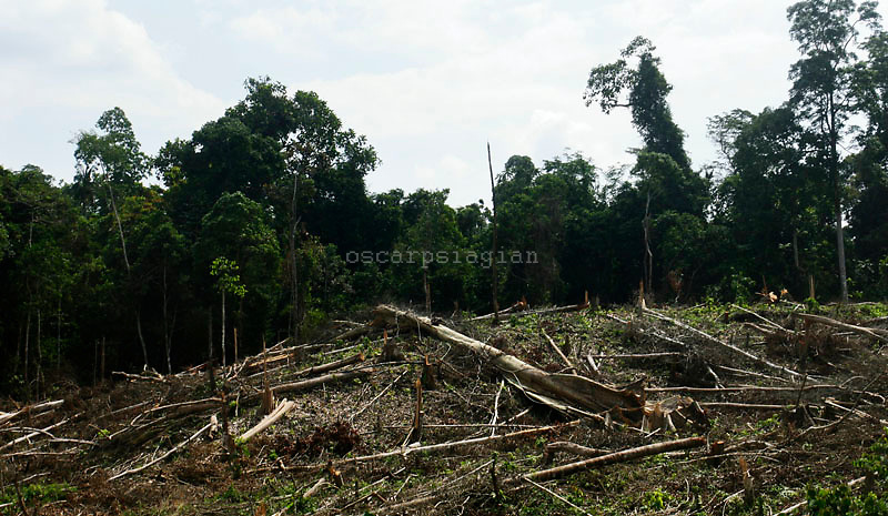 a lot of farmer at the forest area will cut all tree. it can be destroy the ecosystem of orang utan and another animal around the forest