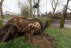 © Licensed to London News Pictures. 26/03/2016. London, UK. A large tree blocks the junction of Chatsworth Road and Lea Bridge Road in Hackney, east London. The tree was uprooted and fell during stormy weather this morning. Photo credit : Vickie Flores/LNP