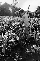 Nicaragua, boy working in the fields
