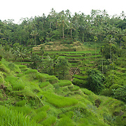 Bali, an Indonesian island east of Java is the smallest province of Indonesia. Bali is home to most of Indonesia's Hindu minority. Bali is known for it's developed arts and handicraft.