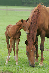 Foal<br /> Stal Smet - Kieldrecht 2004<br /> Photo© Dirk Caremans