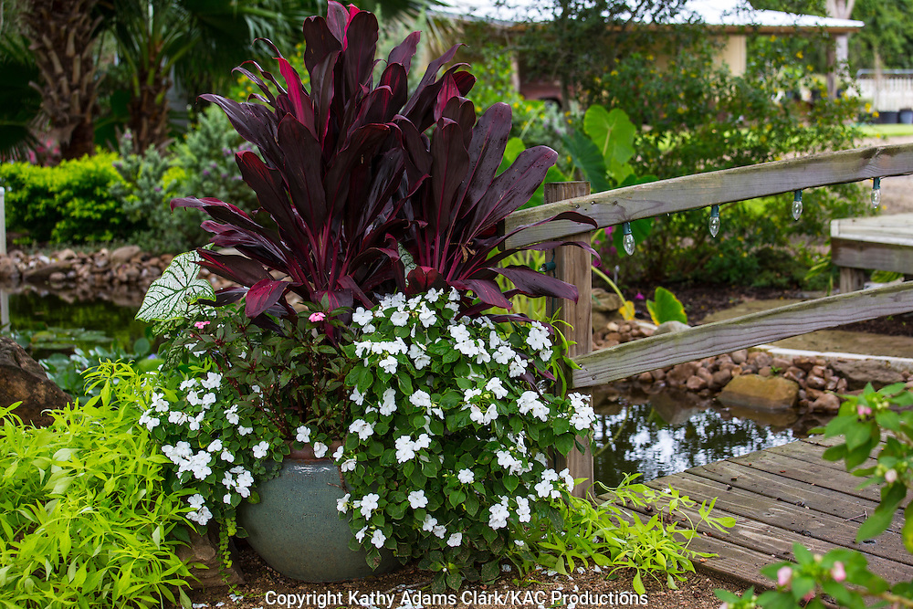 Container garden, Garden, impatients, croton, sweet potato, Houston, late summer, Texas.