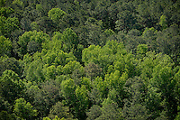 Aerial of trees in mid-spring.