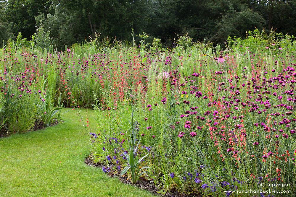 Tom Stuart-Smith's prairie meadow. Planting includes Dianthus carthusianorum, Penstemon barbatus 'Coccineus', Eryngium yuccifolium and Liatris aspera
