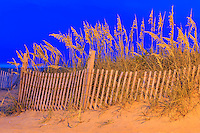 This was photographed using the light from the Avalon pier parking lot at twilight. Twilight gives the blue color in the background and the incandescent parking light makes the sand, sand fence, and sea oats orange.