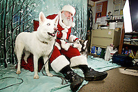 Bob Wilson, playing the role of Santa, sits with Sally Klumpe's Siberian Huskies Rocky, left, and Freckles as they wait for their portrait session with Rainbow Photography to begin Thursday at the Kootenai Humane Society Thrift Store in Coeur d'Alene. Pet owners were albe to bring in their animals for a portrait with Saint Nick with proceeds benefiting the Humane Society.