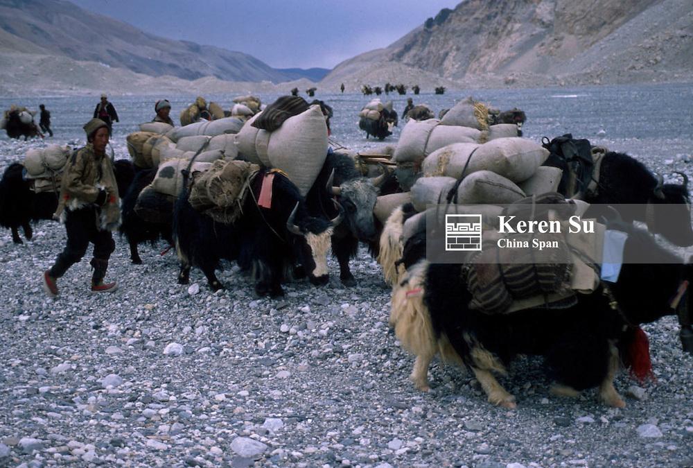 Yak caravan carrying goods in the Ronbuk Valley, Mt. Everest, Tibet