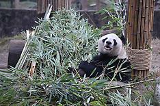 China - Giant Panda Nursing Home - 21 Dec 2016