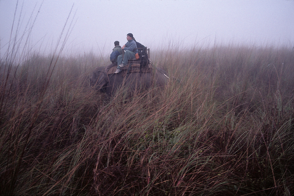 Nepal, Royal Chitwan National Park, Tourists on elephant safari in tall grass along river bank in morning mist
