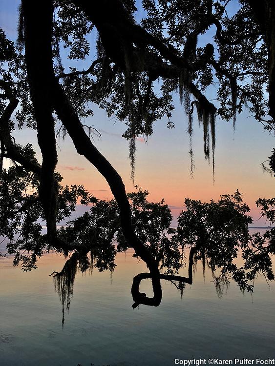 Gulf Coast spanish moss.