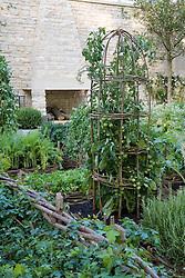 Tomatoes growing up woven hazel rustic obelisk in the Daylesford Organic Summer Solstice Garden.