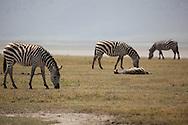 Ngorogoro Crater, Tanzania, Feb 2015 african wildlife