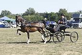 Class 28 - Hackney Pony