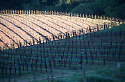 The famous wine producing region of Napa Valley in northern California