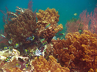 Absolutely beautiful scene of coral and fish on a Japanese wreck off the coast of Bali, Indonesia.