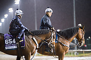 November 1-3, 2018: Breeders' Cup Horse Racing World Championships. Firenze Fire