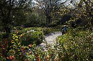 Spring flowers in Shakespeare Garden, Central Park.