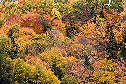 Beaupre, QC, Canada. Canion Sainte-Anne. Vegetacao de Outono / Canyon Sainte-Anne. Autumn leaves